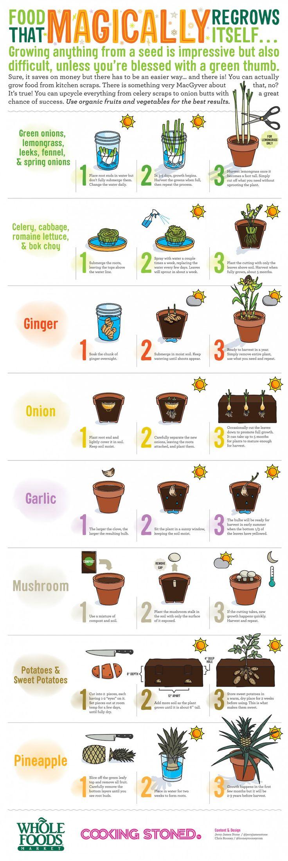 coltivare cibo con gli avanzi di cucina
