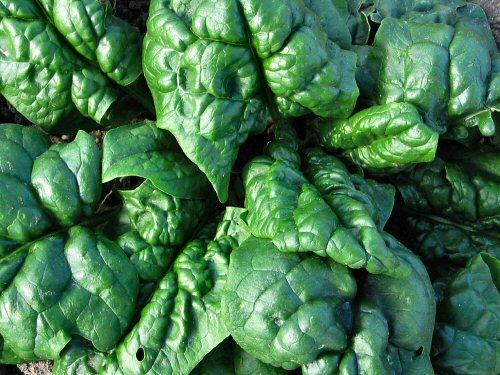 Valori nutrizionali spinaci cotti