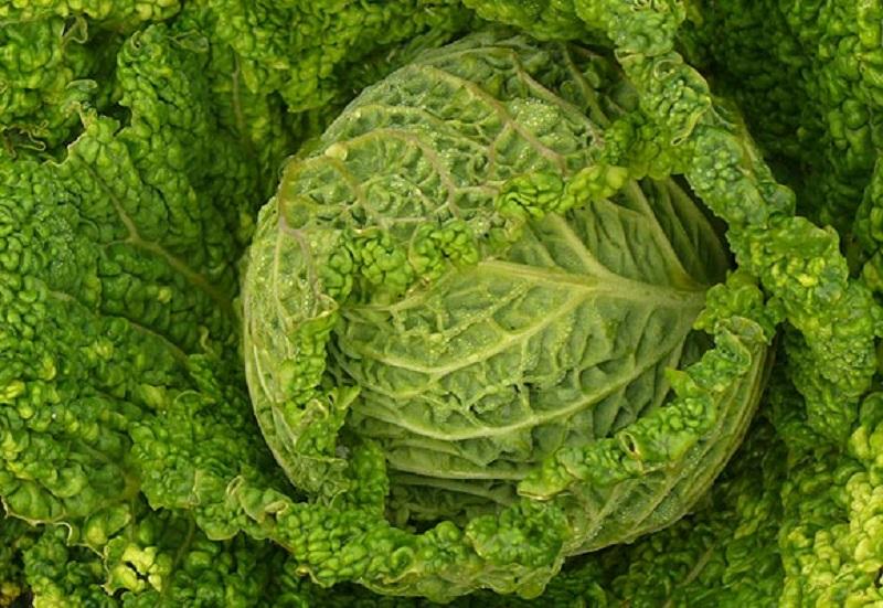 Come cucinare la verza in modo dietetico