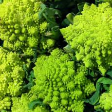 romanesco broccoflower 1