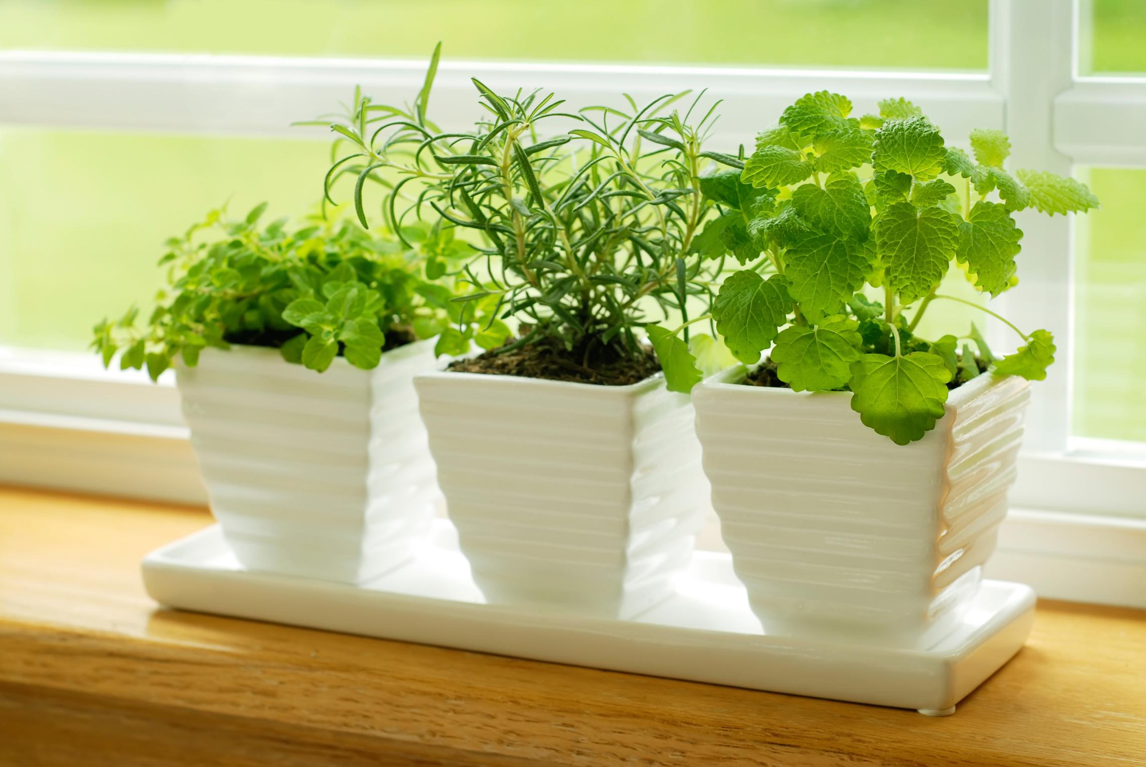 Erbe aromatiche da cucina, come conserlarle fresche più a ...