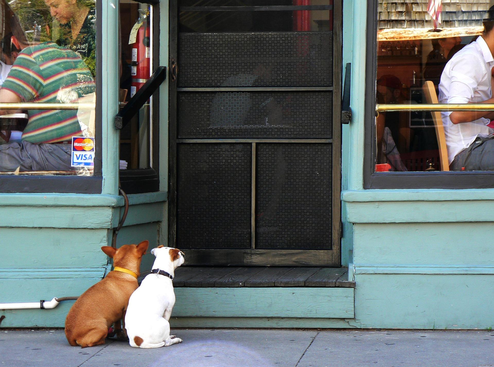 ristoranti per cani