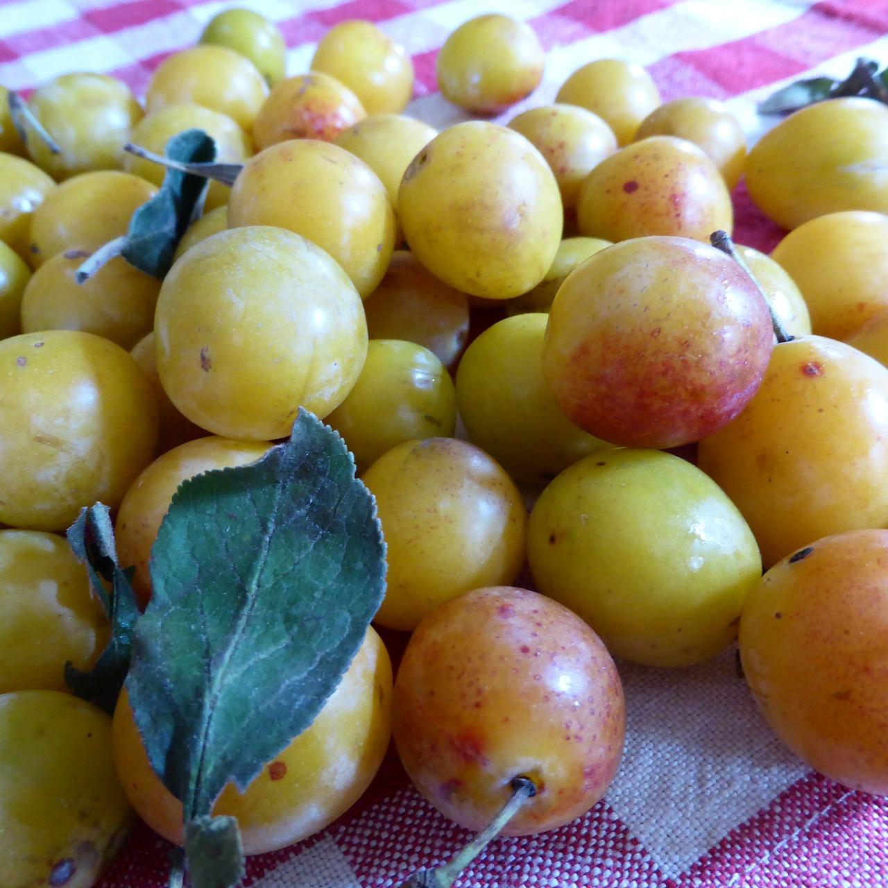 Crostata di prugne gialle fresche