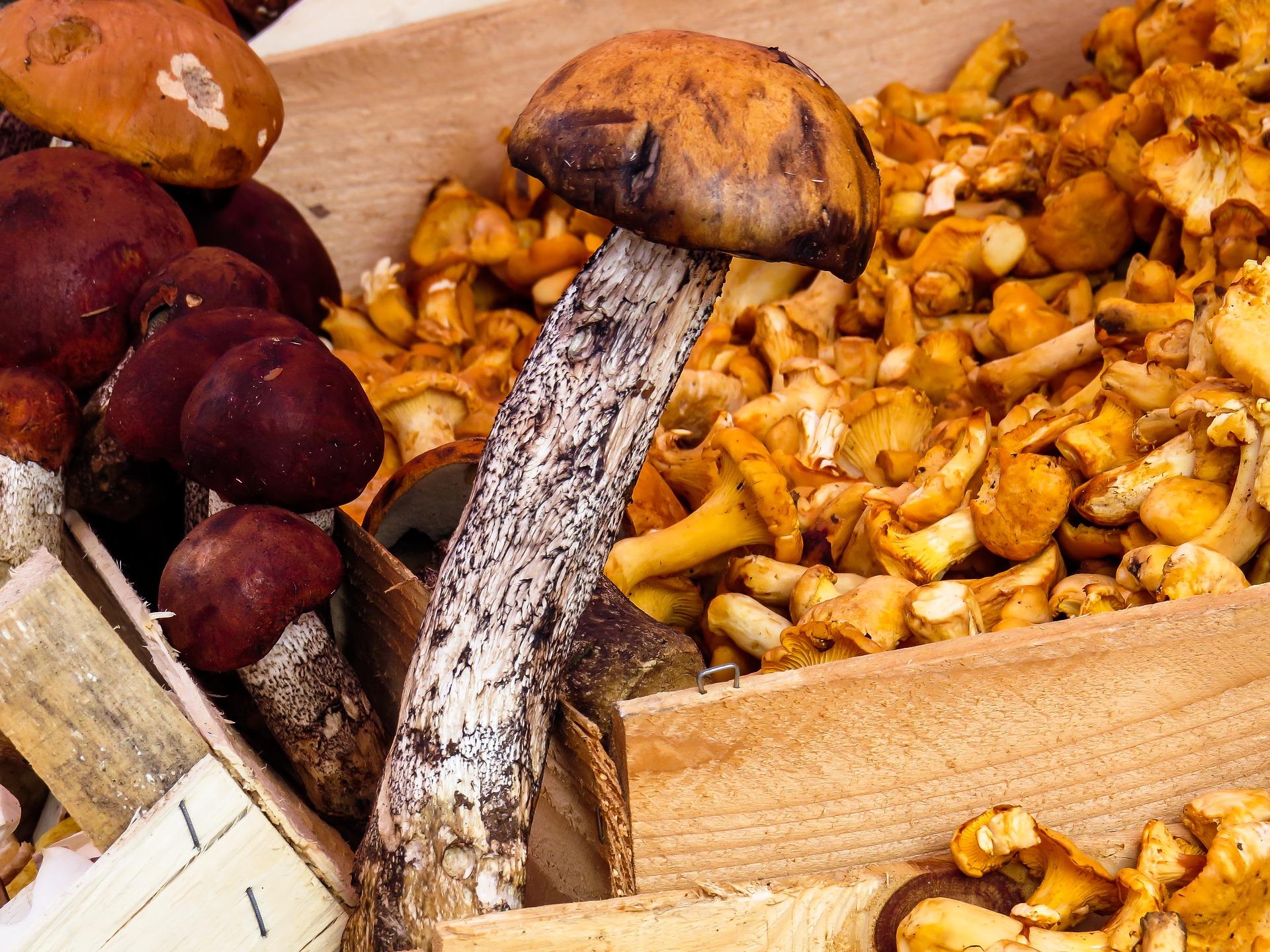 mushrooms 1603666 1920
