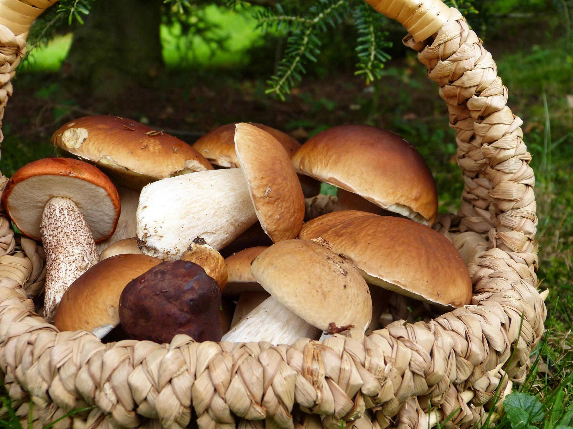 mushrooms 3686917 1920
