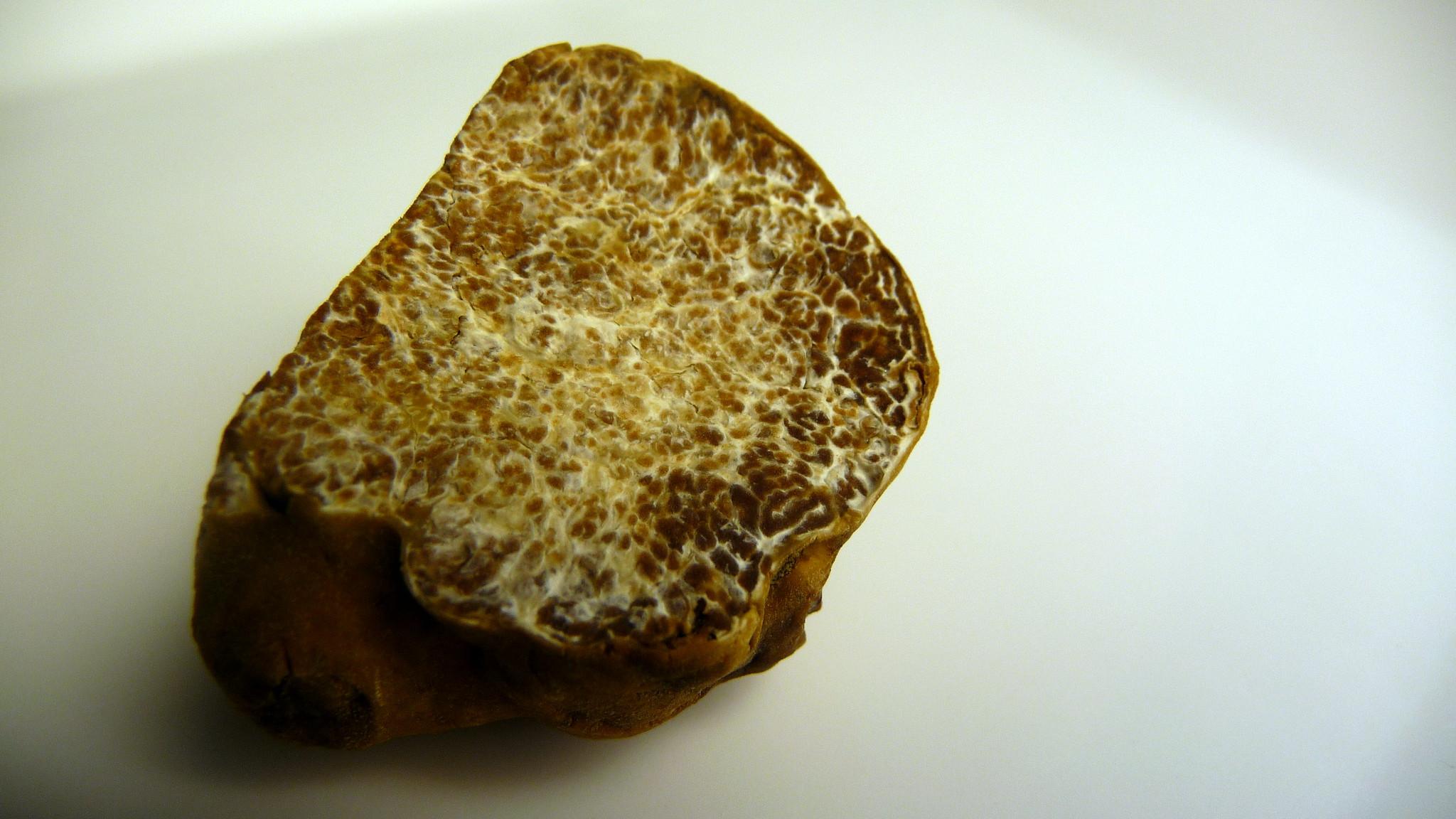 Ricette al tartufo bianchetto: tante sfiziose idee