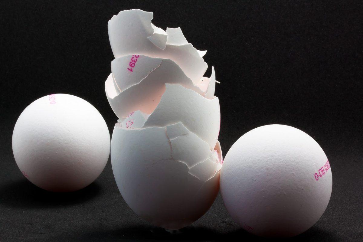 gusci dell'uovo