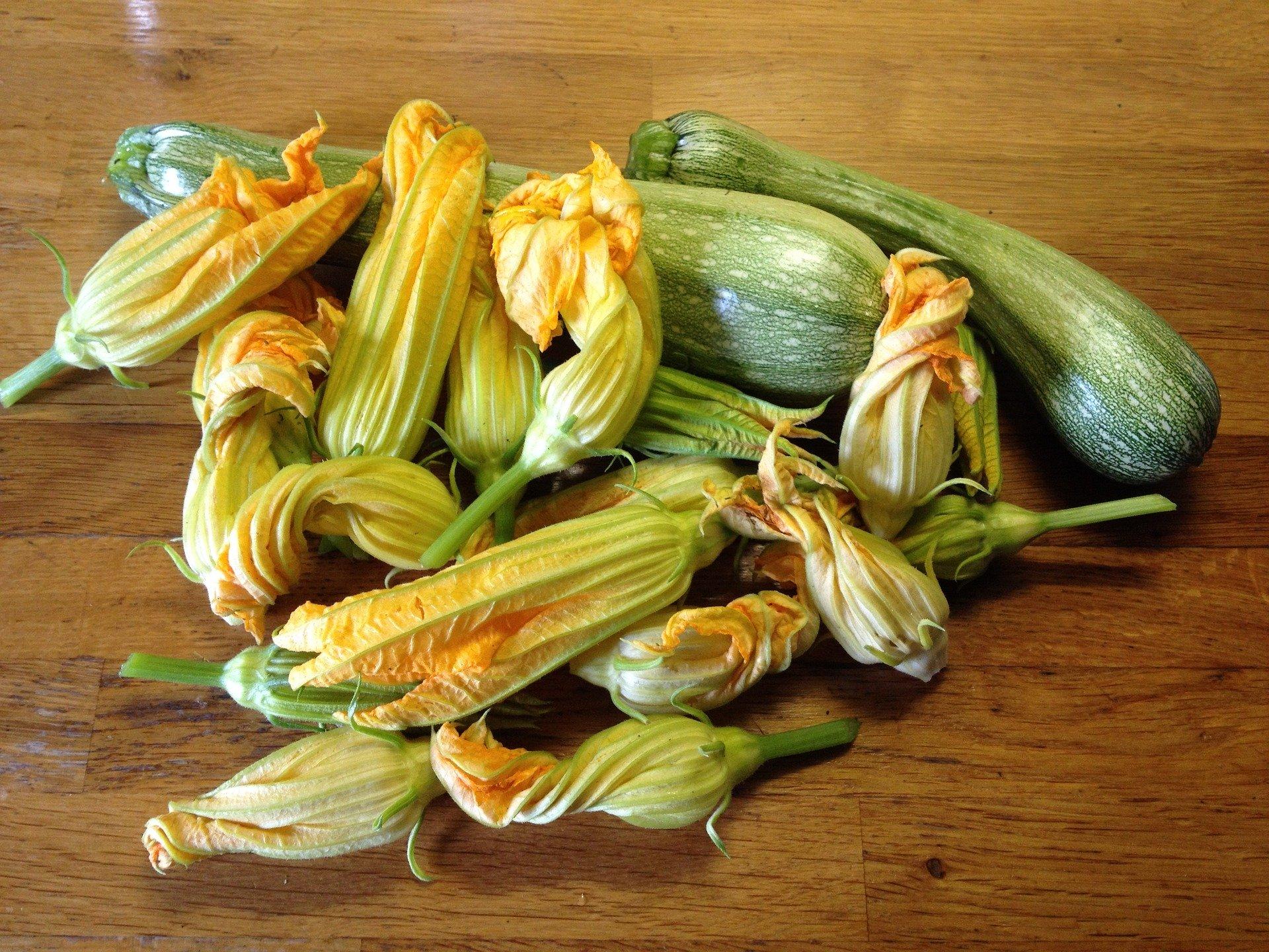 puccia con burrata e fiori di zucca