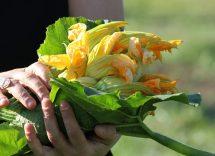 ricetta risotto ai fiori di zucca bimby
