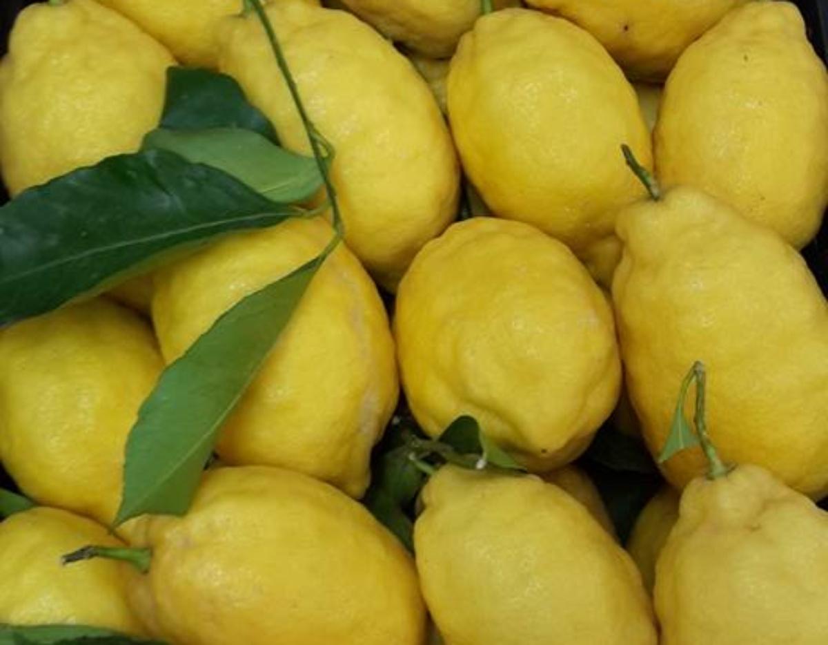 limoncini di carnevale al forno