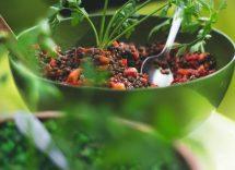 Riso selvatico con lenticchie ricetta
